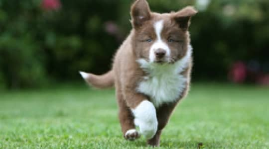 How to choose a healthy puppy?