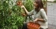 Unemployed Plant a Garden for Food