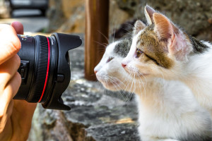 Close up of a camera taking a shot of a mother cat with her cute little kitten standing outdoors.