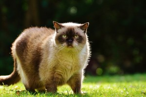 Where to Shop for Low Carbohydrate Cat Food