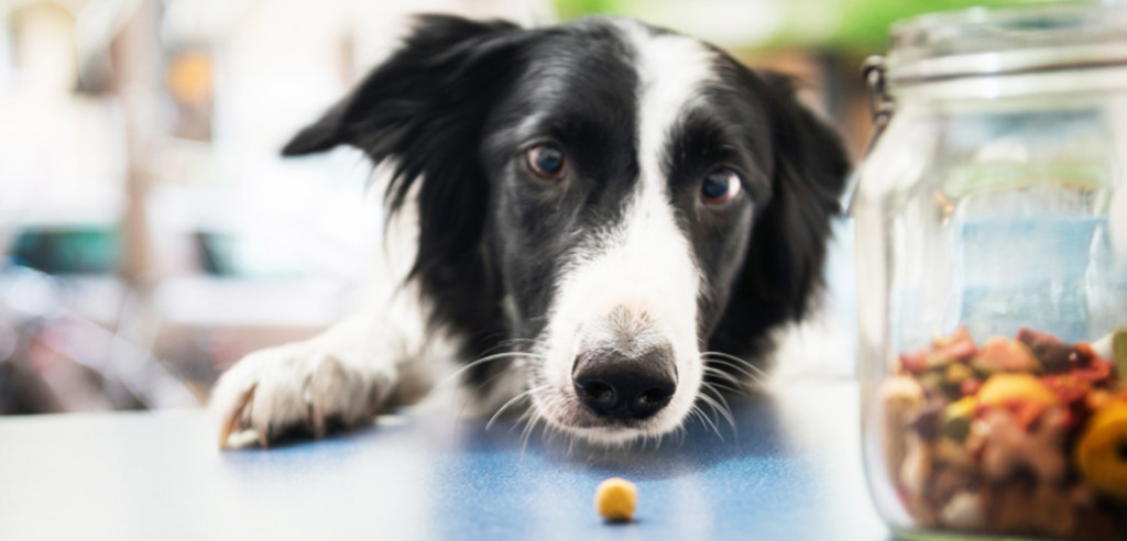 6 Types of Nutrients Your Dog Needs