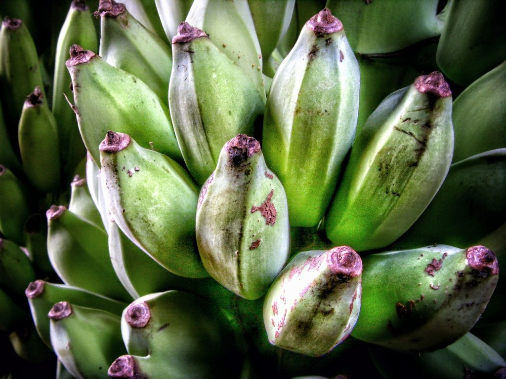 bananas help reduce symptoms of diabetes